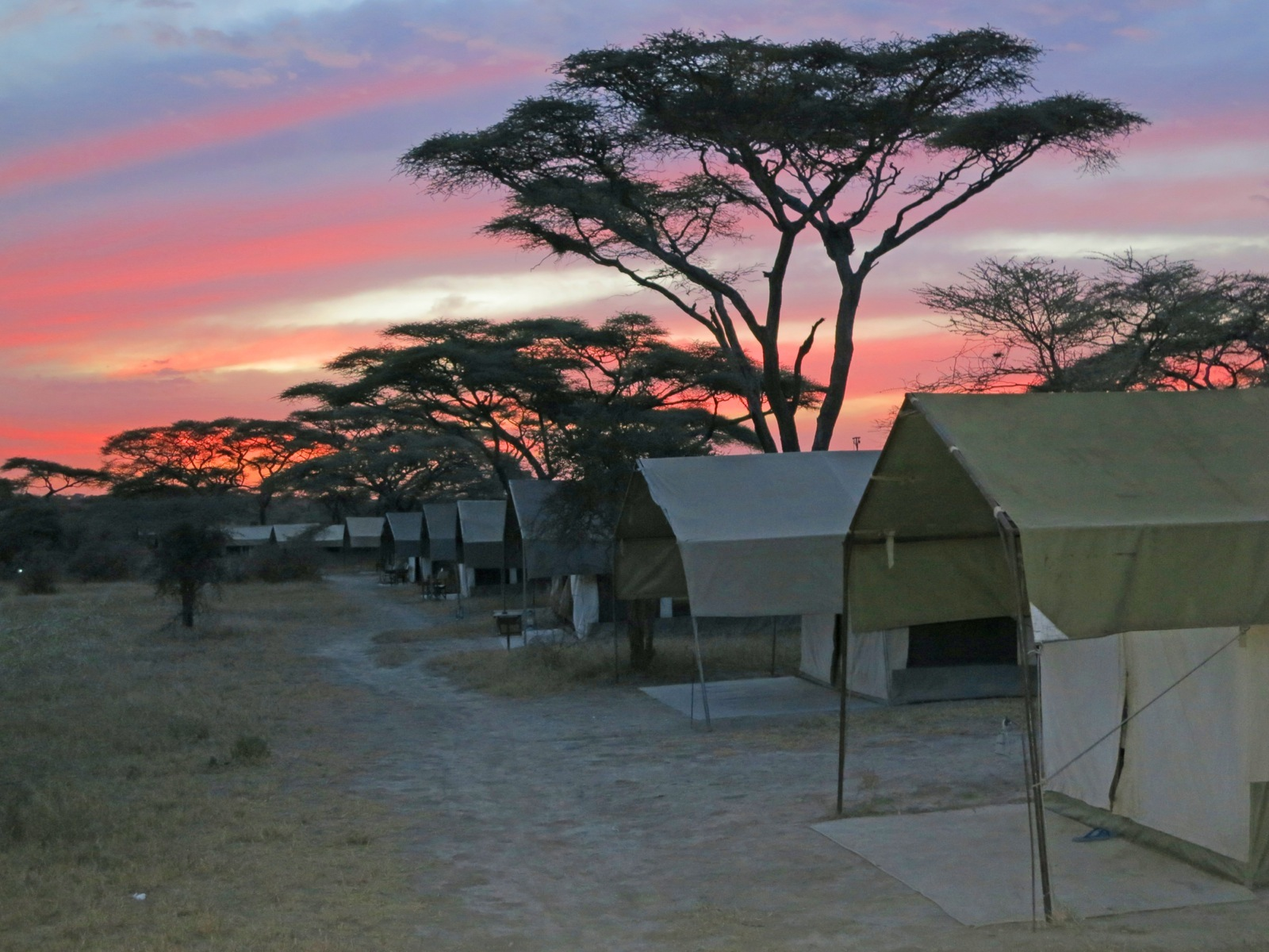 A series of safari tents in a line in the Serengeti with a gorgeous pink sunset in the background.