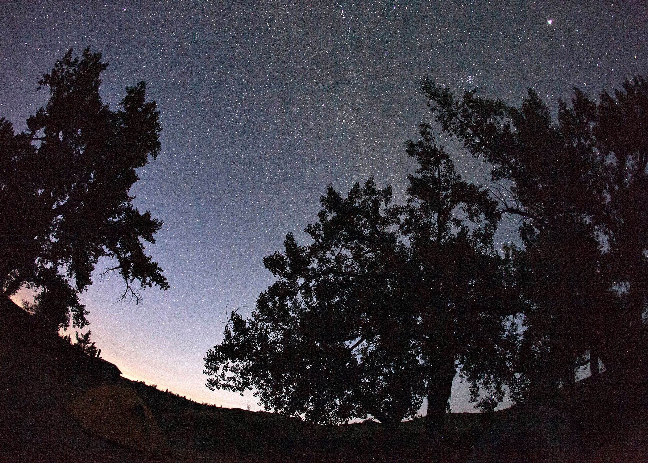 Large trees silhouetted against a sky of millions of stars above a campsite along the Missouri River in Montana.