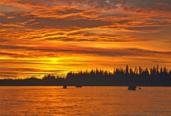 Canoes and a line of evergreen trees is silhouetted against and striking orange sky at sunset.