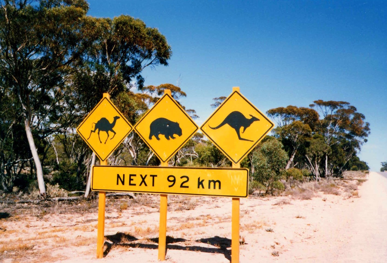 Camel, Koala, and Kangaroo crossing signs along the road to Port of Lucinda.