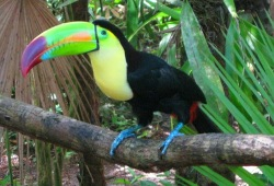 A black and yellow toucan with a large, colorful bill perched on tree branch.