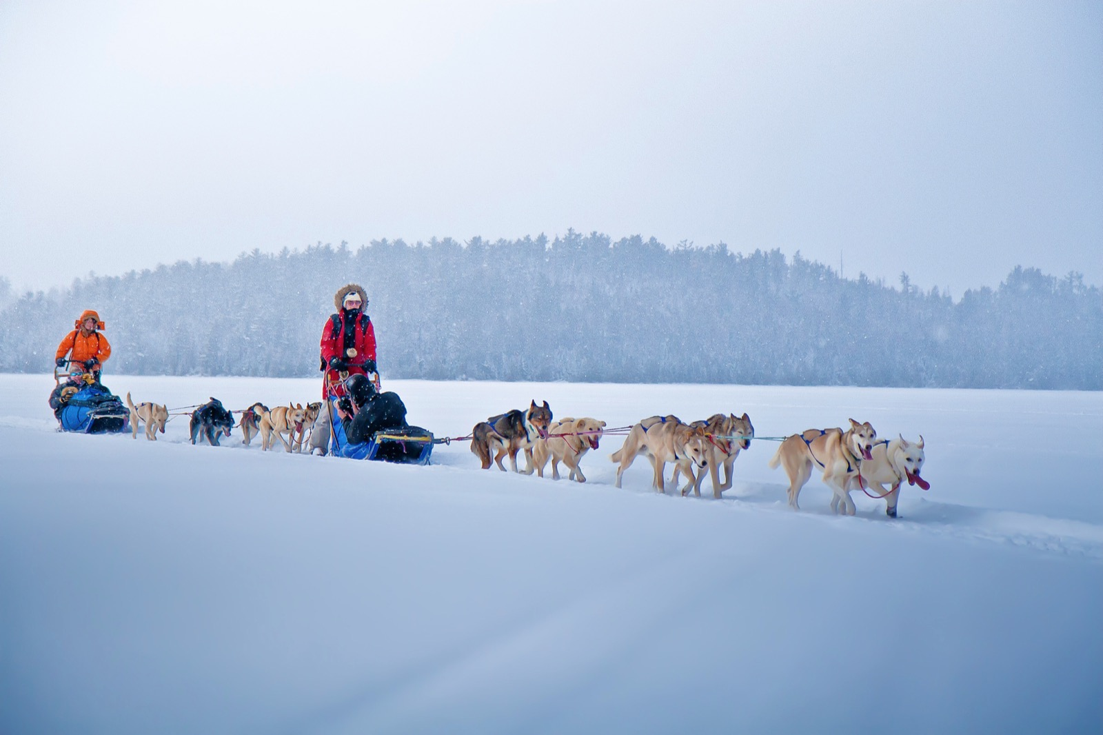 A light snow falls as two teams of sled dogs pull their sleds across a snow-covered lake.