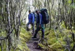 Wearing large backpacks, a guide and a porter trek through a mossy, high-altitude forest.