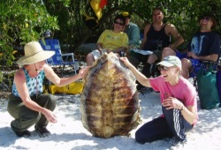 Participants show off the underside of a huge sea turtle shell they discovered on a beach in the Florida Everglades.