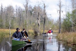 canoeing a narrow channel of the Okefenokee Wildlife Refuge