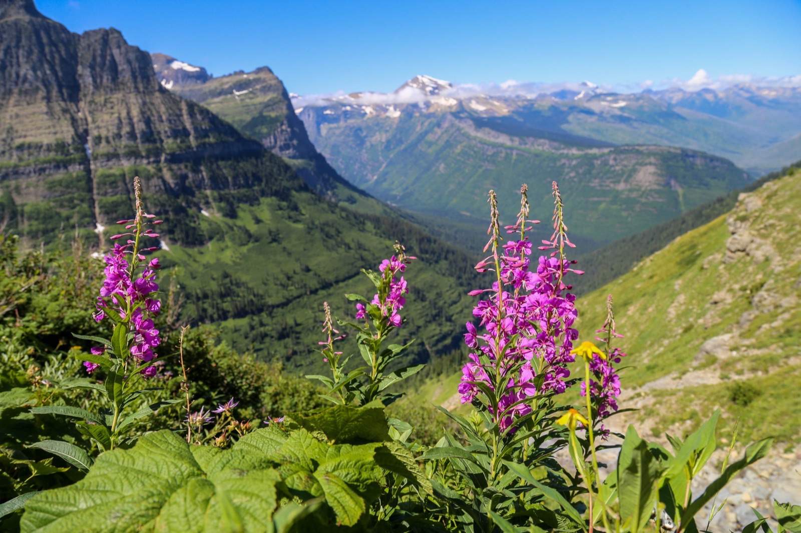 Pink wildflowers in foreground, rugged mountain valley in background in western Montana.