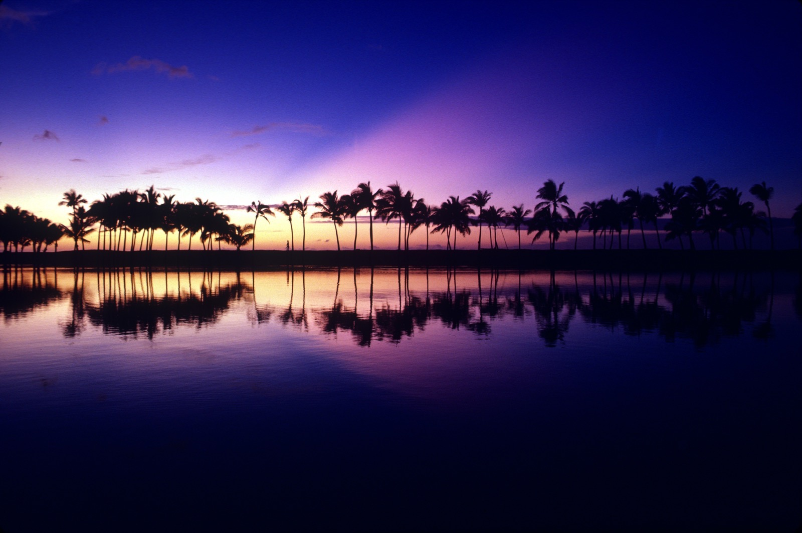 A deep purple and pink sky silhouettes the palm tree lined Hawaiian coast at sunset.