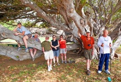 A group of adults takes a break under a large tree with a low canopy.