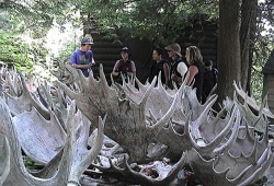 Outside Rock Harbor Visitor Center, a group of hikers learns about moose by examining shed antlers.