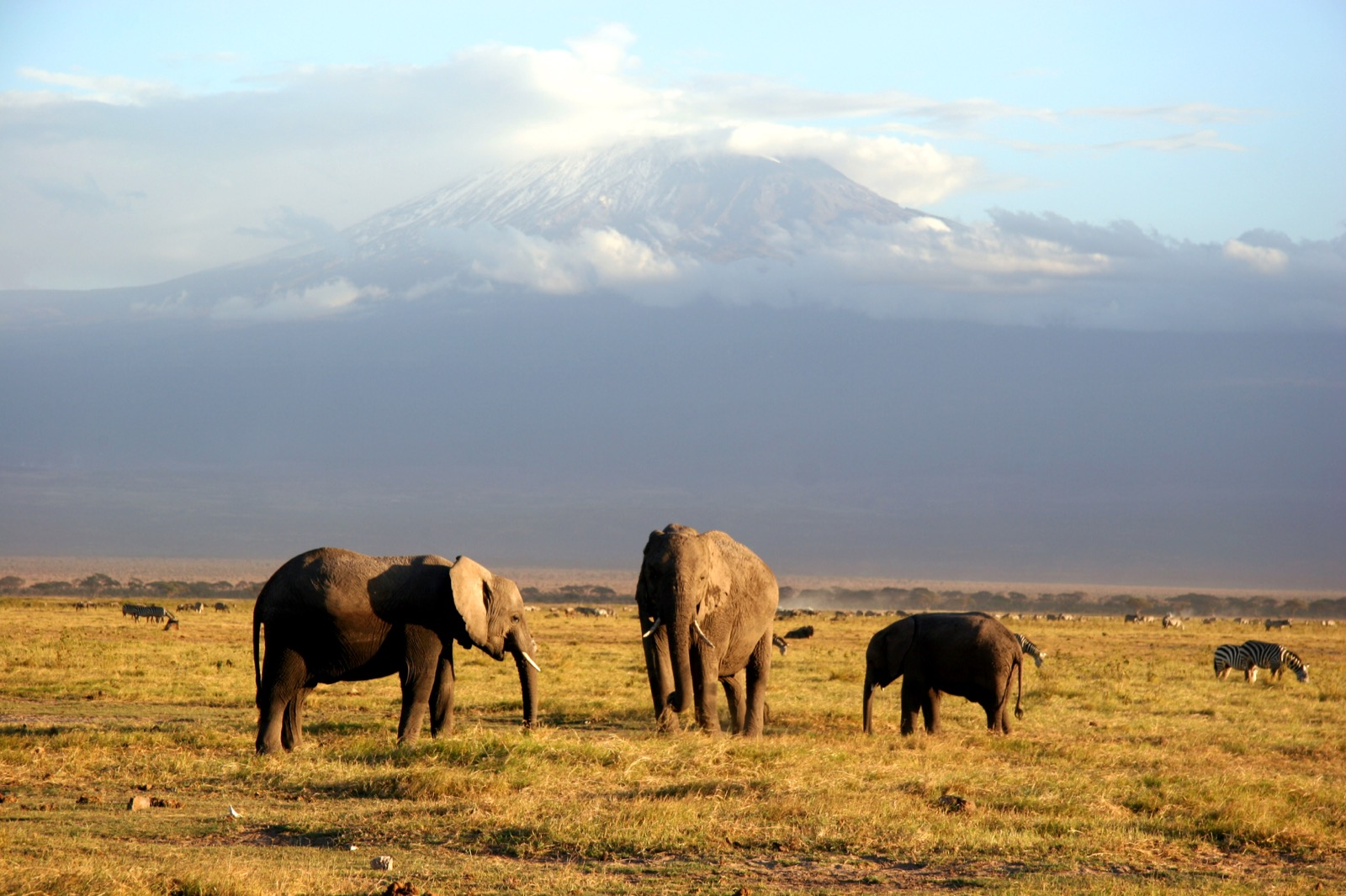 Elephants with Kilimanjaro