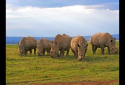 Kenya Wildlife Safari dates and details button