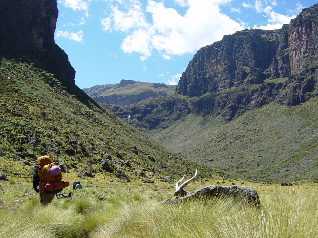 A participant hikes through high-altitude vegetation in the canyons surrounding Mt. Kenya.