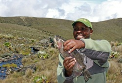Wilderness Inquiry guide, Muthoga, happily holds up a large trout near Mt. Kenya.