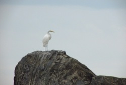 a tall white bird standing on a large rock