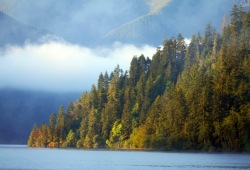 The shores of Lake Crescent are covered with large trees, which are kept hydrated by the near-constant fog.