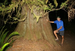 A trip participant on a night hike poses at the base of a large cedar tree in Olympic National Park.