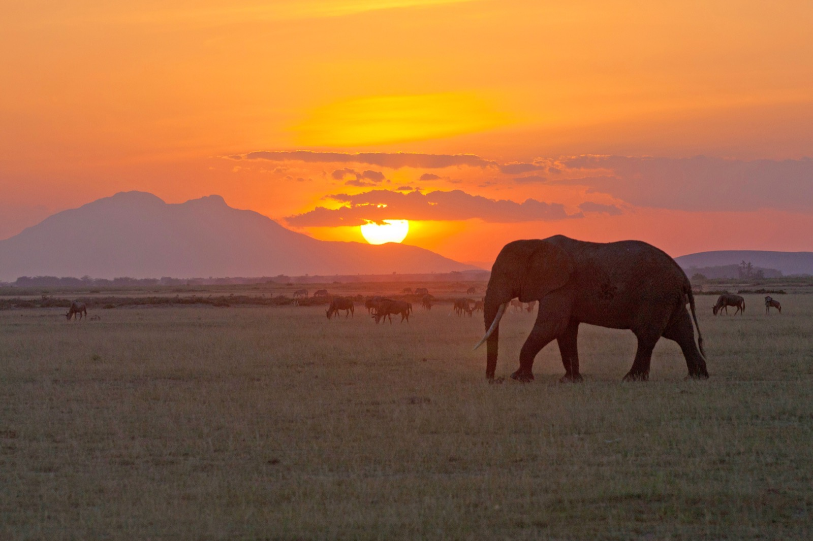 A large elephant is silhouetted in an open plain, with a striking sunset in the background.