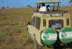 A cheetah passes in front of a Wilderness Inquiry Land Cruiser as participants watch from the vehicle's open top.