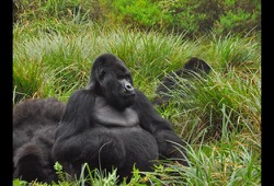 Uganda Safari and Gorilla Tracking dates and details button