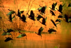 A flock of birds takes flight in the morning sun on Utah's Green River.