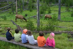 Two elk graze near the campground at Grant Village and a group of kids gathers on a log to watch.